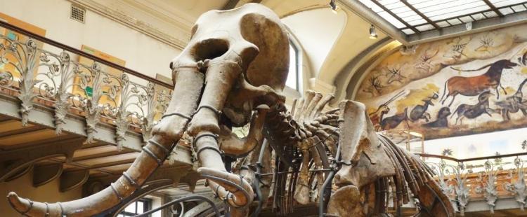 galerie-paleontologie-musee-jardin-plantes-paris-sortir-famille-enfants-75-visite