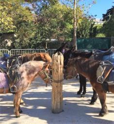 balades-promenades-poney-parcs-jardins-paris-enfants-75-poneys-tour-loisirs-sortie-famille