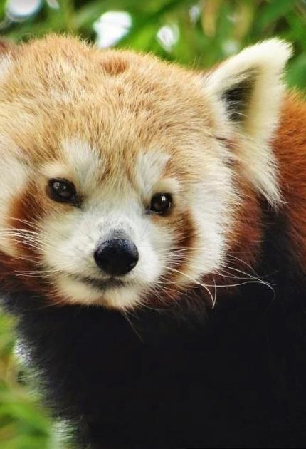 menagerie-zoo-animaux-jardin-plantes-paris-sortir-75-enfants-famille-visite