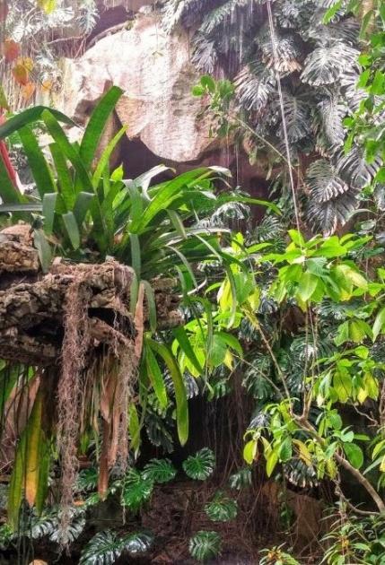grandes-serres-tropicales-jardin-plantes-paris-sortir-75-famille-enfants